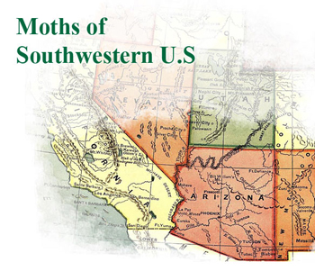 Moths of Southwestern U.S.