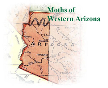 Moths of Western Arizona